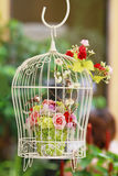 Hanging Bird Case Royalty Free Stock Photos