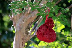 Hanging Bird Feeder with Bird Royalty Free Stock Photos