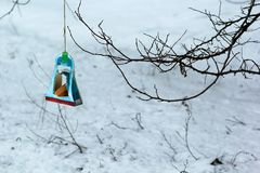 Hanging bird feeder hand made of paper box of sweets by kids after the lesson of kindness at school to save birds Royalty Free Stock Photography