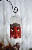 Hanging Bird Feeder With Peanuts. An outdoor bird feeder containing some peanuts stock image