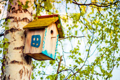 Hanging bird house box. Bird house hanging on a tree birch in spring season royalty free stock photography