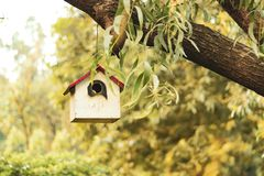 Hanging bird house on tree side view, green yellow leaves royalty free stock images