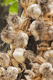 Hanging braided garlic - Old proven way to store  in the home Stock Photos