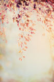 Hanging branch with autumn foliage on blurred nature background, patel retro color. Toned Royalty Free Stock Image