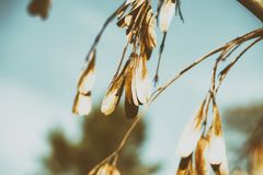 Hanging branches in the sunlight stock photos