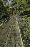 Hanging Bridge in a Cloud Forest Stock Photo