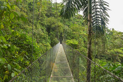 Hanging bridge, Costa Rica Royalty Free Stock Image