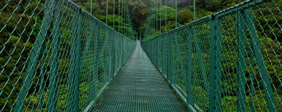 Hanging Bridge in Forest Stock Images