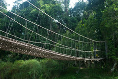 Hanging bridge in forest. Royalty Free Stock Photography