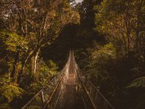 Hanging bridge in forest