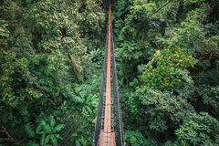 Hanging bridge inside evergreen forest Royalty Free Stock Images