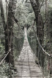 Hanging bridge. Long hanging bridge at primate rescue center near Plettenberg Bay, South Africa Stock Photo