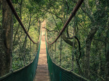 Hanging bridge. Long hanging bridge at primate rescue center near Plettenberg Bay, South Africa Royalty Free Stock Photos
