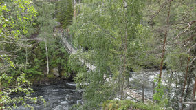 Hanging bridge. In national park in eastern Finland royalty free stock images