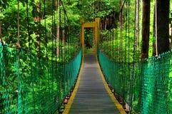 Hanging bridge. In rain forest of Borneo Stock Photos