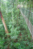 The hanging bridge in the rainforest Royalty Free Stock Photography