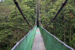 The hanging bridge in the rainforest / Costa rica / Monteverde National Park Royalty Free Stock Photos