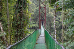 The hanging bridge in the rainforest / Costa rica / Monteverde National Park Stock Image