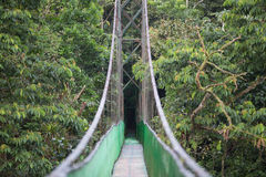 The hanging bridge in the rainforest / Costa rica / Monteverde National Park Stock Images