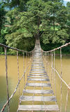 Hanging Bridge to the Tree Stock Photo