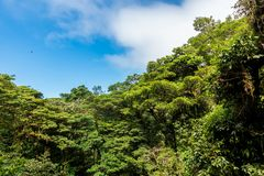 Hanging Bridges in Cloudforest - Costa Rica royalty free stock photo