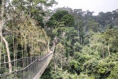 Hanging bridges in Kakum, Ghana royalty free stock photos