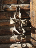 Hanging Bridle with Blinders Royalty Free Stock Photos