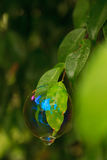 Hanging Bubble. A bubble dangling precariously off a tree leaf stock image