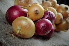 Hanging bunch bundle of onion Stock Image