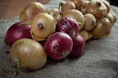 Hanging bunch bundle of onion Stock Photo