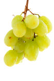 Hanging bunch of grapes Stock Image