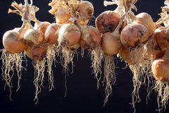 Hanging bunch of onion  Stock Photos