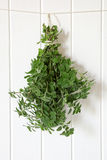 Hanging Bunch of Oregano Stock Image