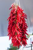 Hanging bunch of red hot chili peppers for sale at Sineu market, Majorca. Spain Stock Image