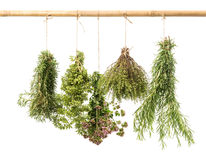 Hanging bunches of fresh herbs isolated on white Royalty Free Stock Photography