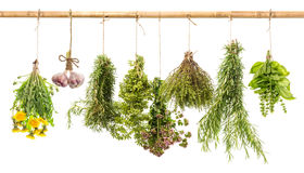 Hanging bunches of fresh spicy herbs. herbal medicine. Hanging bunches of fresh spicy herbs isolated on white background. rosemary, basil, thyme, oregano royalty free stock photos