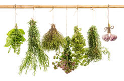 Hanging bunches of fresh spicy herbs isolated on white Royalty Free Stock Images