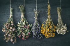 Hanging bunches of medicinal herbs and flowers. Herbal medicine. Retro toned photo royalty free stock photos