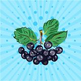 Hanging bundle of chokeberry on a blue background,lines,dots.Hand made in the style of pop art.Vector illustration.Eco. Hanging bundle of chokeberry on a blue Royalty Free Stock Photo