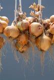 Hanging bundle of onion Stock Photos
