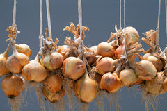 Hanging bundle of onion  Royalty Free Stock Photos