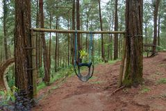 Parks in pine forests are equipped with traditional swings royalty free stock photo