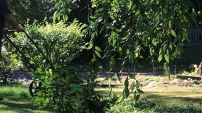 Mowing yard behind bush and willow. Hanging cherry in front of guy mowing lawn stock video
