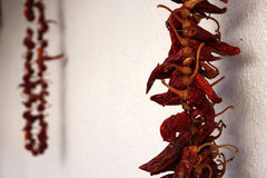 Hanging Chili Peppers. Red Hot Chili Peppers Hanging on the Wall Royalty Free Stock Photography