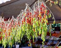 Hanging Chili Peppers, Mount Hood, Oregon. Seasonal chili peppers for sale at roadside flower and fruit vegetable market near Mount Hood, just outside of Stock Image