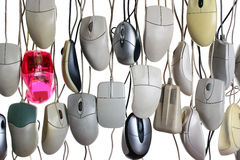 Hanging computer mice isolated on white background.  Royalty Free Stock Photography