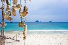 Hanging coral, Perhentian Islands, Malaysia