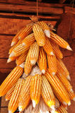 Hanging Corn at outdoor Stock Photo