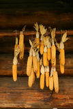 Hanging corncobs at the wood house Royalty Free Stock Photography