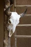 Hanging cow skull Royalty Free Stock Photos